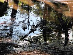 pozzanghera ai giardini pubblici (mareblu2013) Tags: pozzanghera giardini ventimiglia liguria riflesso lampione