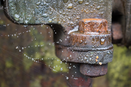 rust and cobwebs 02 oct 16