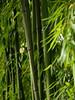 Chinese Garden (Christoph Kampf) Tags: chinese garden chinesegarden bamboo bambus nebel sunlight green nature statue nikon d700 80200 nikond700