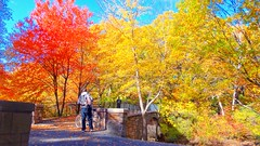 Bike ride to Jamaica Pond (Brooks Payne) Tags: autumn brooksbos boston brooks cybershot color colour colours colorful dsctx30 family fall friend friendship geotagged jamaicapond landscape leaves massachusetts newengland nature sony woods