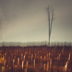 Hope for the Next Generation (ChrisDale) Tags: abstract autumn bare bracken brown chrisdale chrismdale dark desolate ferns icm leaves multipleexposure nottingham nottinghamshire notts novemeber oxton oxtonbogs red support tree winter