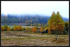 :) (dariusz_lipinski) Tags: fog hills red green yellow brown trees landscape