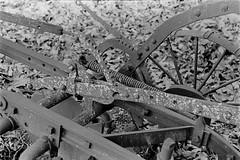 Rusty Old Farm Implement (bac1967) Tags: 1935 leica iiia leitz elmar 5cm f35 lens leicaiiia leitzelmar5cmf35lens kodak trix tx film kodaktrix kodakfilm rodinal rodinal150 blackwhite blackandwhite bw blackandwhitefilm 135 35 35mm 135film 35mmfilm elmarlens elmarltmlens rusty crusty farmimplement farm dairy machinery plow decay decayed bothell bothellwa pnw pacificnorthwest