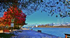 Port Dalhousie Fall 2016 (Rex Montalban Photography) Tags: rexmontalbanphotography portdalhousie stcatharines ontario niagara