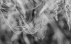 Spinnennetz im Morgentau (fotaennie) Tags: rieselfelder spinnennetz nebel morgentau