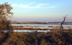Le petit arbre nu des marais (Dominique Dumont Willette) Tags: marais étang cmargue lessaintesmariesdelamer paca ciel bleu arbre nu arbres eau
