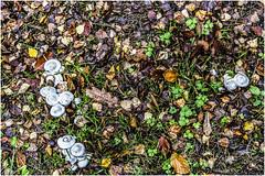 Mushrooms (Jistfoties) Tags: dawyckgardens autumn scottishborders botanicgardens landscape canon5d canon24105f4
