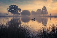 At peace (stephen.darlington) Tags: bushypark surrey heron sunrise mist boating pond golden peace morning