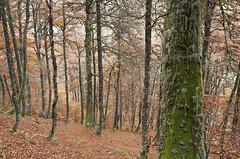 Hermo (elosoenpersona) Tags: monasterio hermo asturias fuentes del narcea otoo autumn colores fall colors hayedo forest bosque elosoenpersona