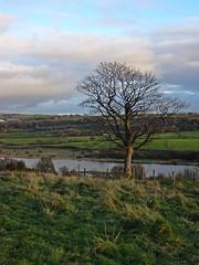 One Tree Hill (Bricheno) Tags: lochwinnoch bricheno courtshaw castlesemple castlesempleloch loch barrloch kilbirnieloch scotland escocia schottland cosse scozia esccia szkocja scoia