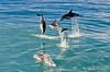 NZ 3515 - Nueva Zelanda - Kaikoura - Sperm Whale y Dusky dolphins (Jano Escuer) Tags: nuevazelanda oceanía