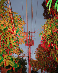 le vrai et le faux, Tuxtla,Chiapas,Mexico (Benoit.P) Tags: landscape rainbow art crazy documentary fineart flash forest green light mexico nature neon print wild