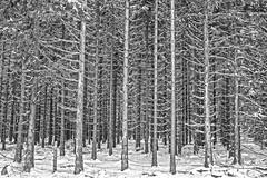 Winterwald - Winter Forest (pwendeler) Tags: winterwald winter winterforest rhön rhönmountains wood wald forest snow schnee sonynex7 baum tree schwarzweis blackandwhite monocrom monocrome hessen germany landscape landschaft einfarbig