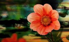 IMG_4218 Cielo y flor (Sky and flower) (Rodolfo Frino) Tags: nature natur natural naturaleza flor flower exposure cielo sky ciel closeup