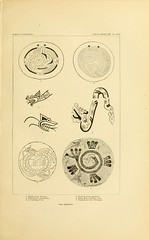 n206_w1150 (BioDivLibrary) Tags: antiquities indianart indians shellsinart smithsonianlibraries bhl:page=11258807 dc:identifier=httpbiodiversitylibraryorgpage11258807 manyhatsofholmes taxonomy artist:name=katecliftonosgood