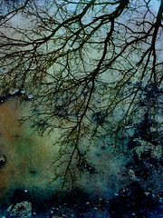 ( Anne Seltmann ) Tags: puddle tree mirror texture stackables