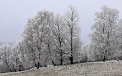 (:Linda:) Tags: germany thuringia village bürden hoarfrost tree birchtree