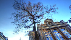 The theater is so endlessly fascinating because it's so accidental. It's so much like life. Arthur Miller (genevieve van doren) Tags: bruges brugge theatre tree arbre sun soleil