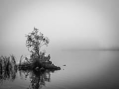 Misty morning on Haapajärvi's reservoir