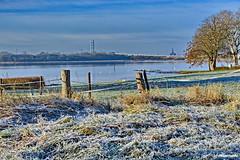 Am Strelasund - Raureif (garzer06) Tags: wasser raureif frost weis baum deutschland rügenbrücke strelasund vorpommernrügen inselrügen koppel koppelzaun wolken himmel wolkenhimmel insel mecklenburgvorpommern vorpommern rügen