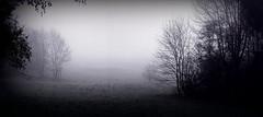 melancholy (oxyrhynchos - OLOliuqui) Tags: sinister dark melancholic melancholy december seasons black white panorama