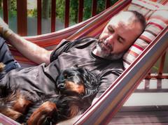 Lara_hammock (jormit1) Tags: lara animals dogs sleep setter