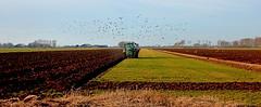 Wieringen (Meino NL) Tags: wieringen polder meeuwen noordholland northholland landbewerken landschap hollandskroon ploegen plow plough