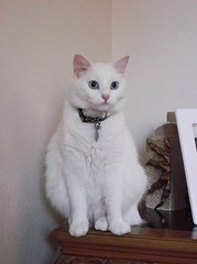 DSCF0041 (WildestHeart4ever) Tags: cats pets cute animals kittens