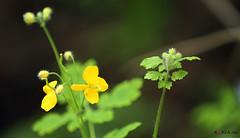 Korea_Nature_in_Gyeonggido_06 (KOREA.NET - Official page of the Republic of Korea) Tags: travel hiking korea wildflowers namhansanseong   gyeonggido     koreanature    namhansanseongfortress   cheonjinam chonjinam