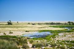 Etosha National Park (jbdodane) Tags: africa animals waterhole namibia etosha etoshanationalpark freewheelycom