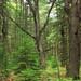 Algerine Swamp Natural Area (3)