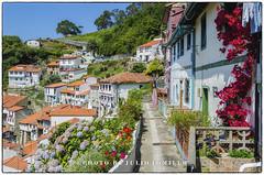 _DSC0115- (Julio Tomillo) Tags: espaa color nikon europa asturias nikond5100