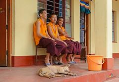 """IF YOU WANT TO BE HAPPY, PRACTICE COMPASSION."" :- The Dalai Lama (GOPAN G. NAIR [ GOPS Creativ ]) Tags: india tourism buddhist tibet monastery tibetan karnataka coorg settlement bylakuppe gops kudagu gopsorg gopangnair gopsphotography"