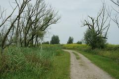 DSC06375 (Ton Smilde) Tags: oostvaardersplassen naturereserveinthenetherlands