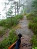 _140718_2724 (verbeek_dennis) Tags: fog finland landscape dachshund tax kaapo dashond mäyräkoira такса gravhund jazvečík gåsgårdsträsket nikons9700 táksa