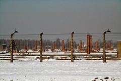 Auschwitz (003)