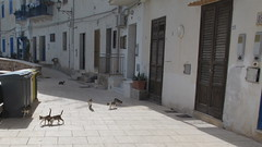 Out for a stroll (Florence3) Tags: cats sicily egadiislands levanza