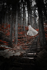 _MG_62641 (wild_empress) Tags: red canada classic halloween nature composite fairytale stairs forest dark scary woods experimental witch unique ghost creative goddess surreal haunted creepy spooky textures fantasy portraiture ethereal albumcover bookcover cdcover wilderness emotional conceptual dreamlike storybook legend selfportraiture thrills myth timeless fable whimsical storytelling imaginative magazinecover mythical chills bookcoverartist imageusage wildempress vanessaskotnitsky