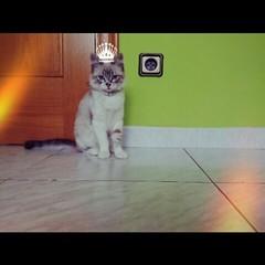 I'm the QUEEN ❤ ❤ ❤ #follow4follow #cats #cat #queen #bitxuuu @evaescudero_ (helentaylorj) Tags: cats cat im queen ❤ follow4follow bitxuuu evaescudero