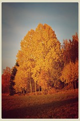 Yellow and orange colors are coming soon! (J. Lindström) Tags: autumn trees orange yellow down drop leafs hdr pois syksy oranssi puut lehdet keltainen tippuvat