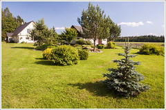 20140708. Kaunis kodu. Paekla. Nurme talu. 7335 (Tiina Gill (busy)) Tags: house building tree garden estonia homestead raplamaa nurme mrjamaavald paekla
