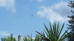 Newcastle Air Display (arensee) Tags: vulcan xh588