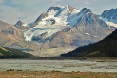 Mt Athabasca, North Face. Sunwapta River.