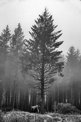 South Barrule (55) (cj_iom) Tags: blackandwhite mist nature canon walking photography walks scenic glen isleofman manx iom southbarrule ellanvannin canon1100d manxnationalglen manannanmaclirscloak manxbroth