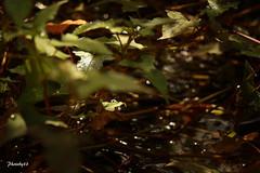 (33 Photography) Tags: light shadow lake plant green forest surface  lightandshadow  nantou         lakesurface nantouhsien