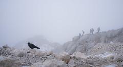 company at the summit of Triglav (modulartechnix) Tags: bird slovenia summit fujifilm tri