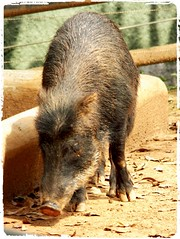 Image42 (Daniel.N.Jr) Tags: animal selvagem zoologico kodakz990