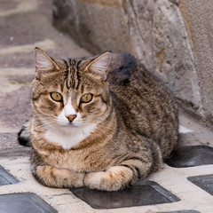 Bellissimo gatto (gilliesavo. Catching up :)) Tags: city windows italy holiday history church bicycle gardens botanical doors lucca september bicycles tuscany alto walled mediaeval anfiteatro funicolare 2014 montecatina