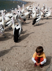 Look Mum I am a Pelican! (Jocey K) Tags: people pelicans birds sand labrador shadows australia queensland goldcoast