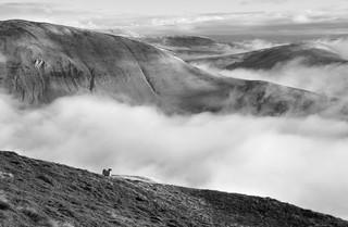 Looking north-east from Great Dummacks, Howgill Fells near Sedbergh, Yorkshire Dales National Park, Cumbria, UK